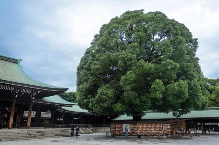 meiji-shrine-8967